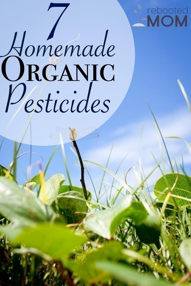 7 Homemade Organic Pesticides