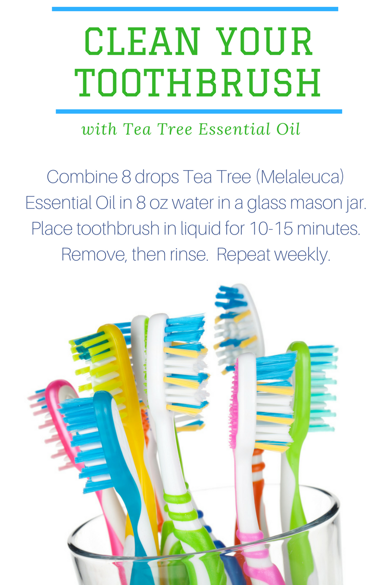 how to clean your toothbrush with tea tree essential oil rebooted mom. Black Bedroom Furniture Sets. Home Design Ideas