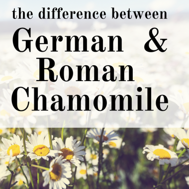 The Difference Between German and Roman Chamomile