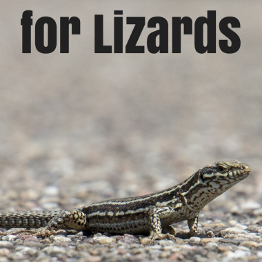 Home Remedies for Lizards
