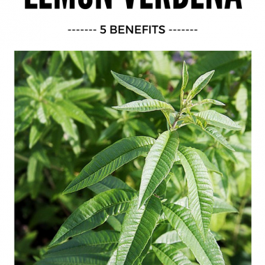 5 Benefits to Drinking Lemon Verbena