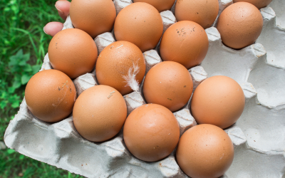 From organic eggs to free range, and vegetarian fed, which are best- How do you know- Here's a guide to helping you buy the healthiest eggs.
