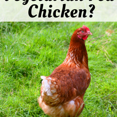What's the Deal with Vegetarian Fed Chicken?