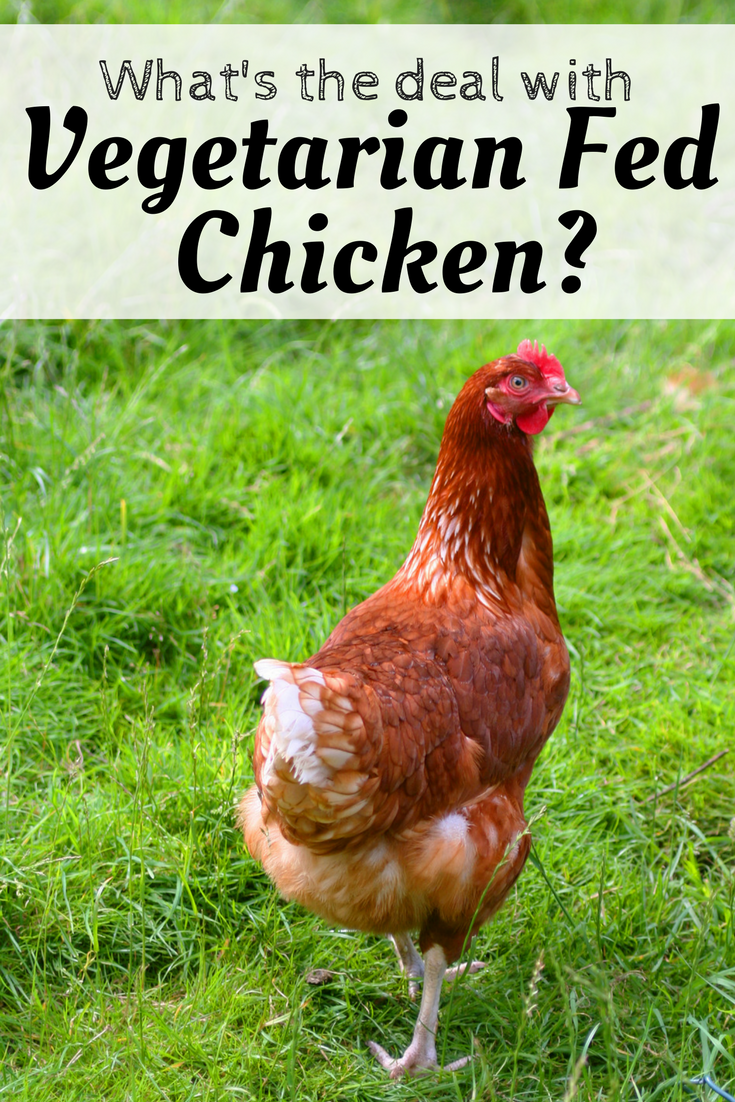 Vegetarian fed is quite popular in industrial operations and that is because vegetarian fed reduces the risk of animal products in poultry feed.  It isn't always better though - find out why.