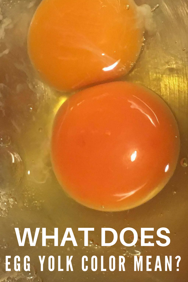 Yellow yolks, pale yolks, orange yolks, and even dark red yolks - what do you know about the color of your egg yolks?