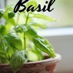 How to Freeze Basil