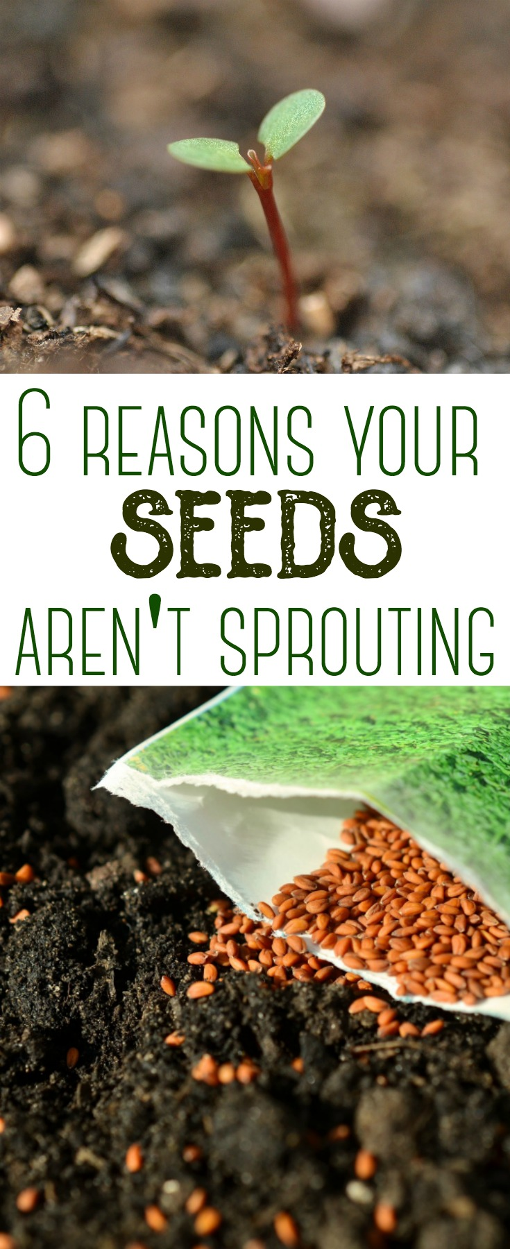Planting seeds is one of the first steps to having a successful garden. But sometimes they can be tricky to use! Here are 6 reasons your seeds may not be sprouting in your garden. #gardening #seeds #backyardgardening