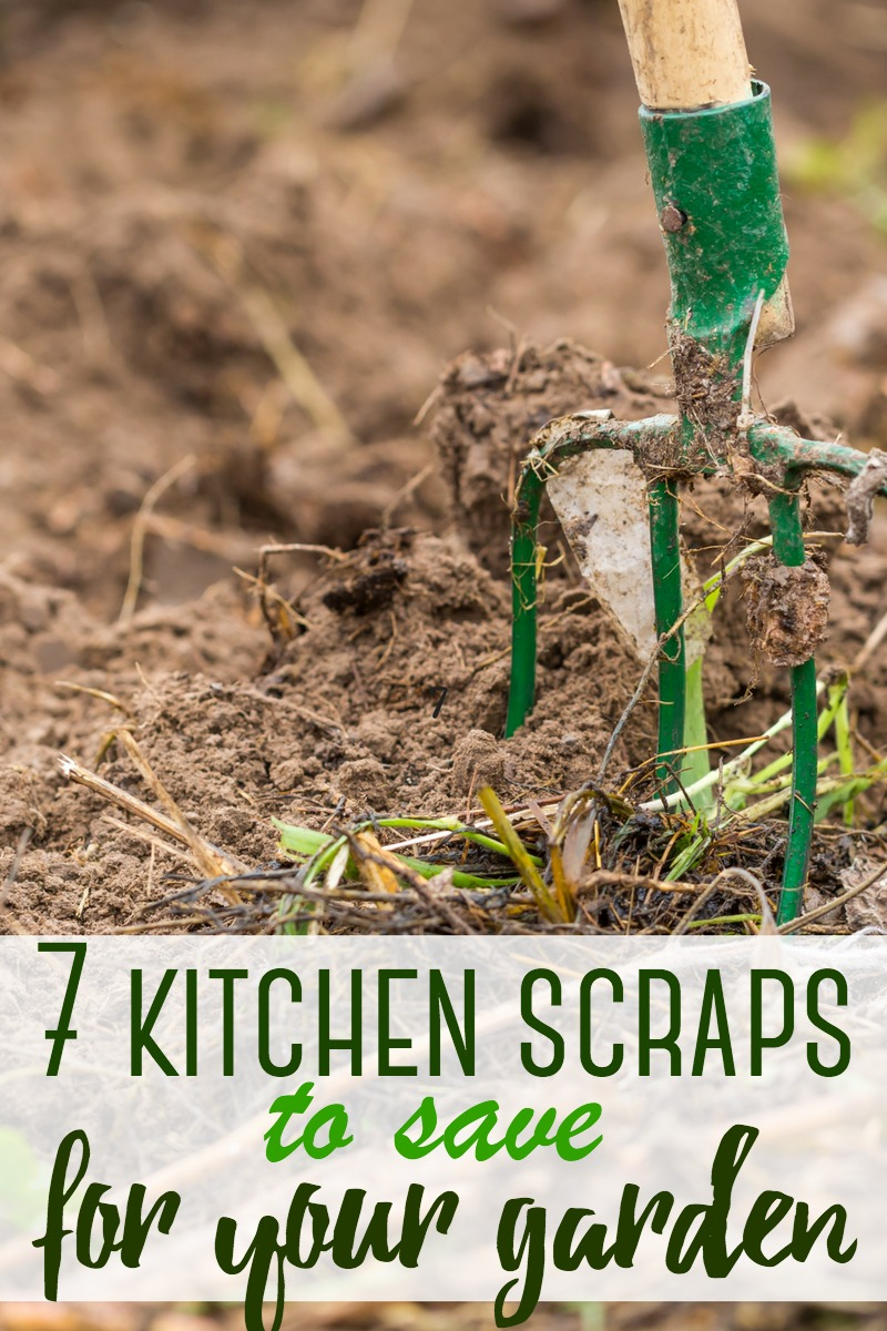 These 7 kitchen scraps are invaluable for the home garden! Instead of tossing them away, keep them and let them work magic on your plants!