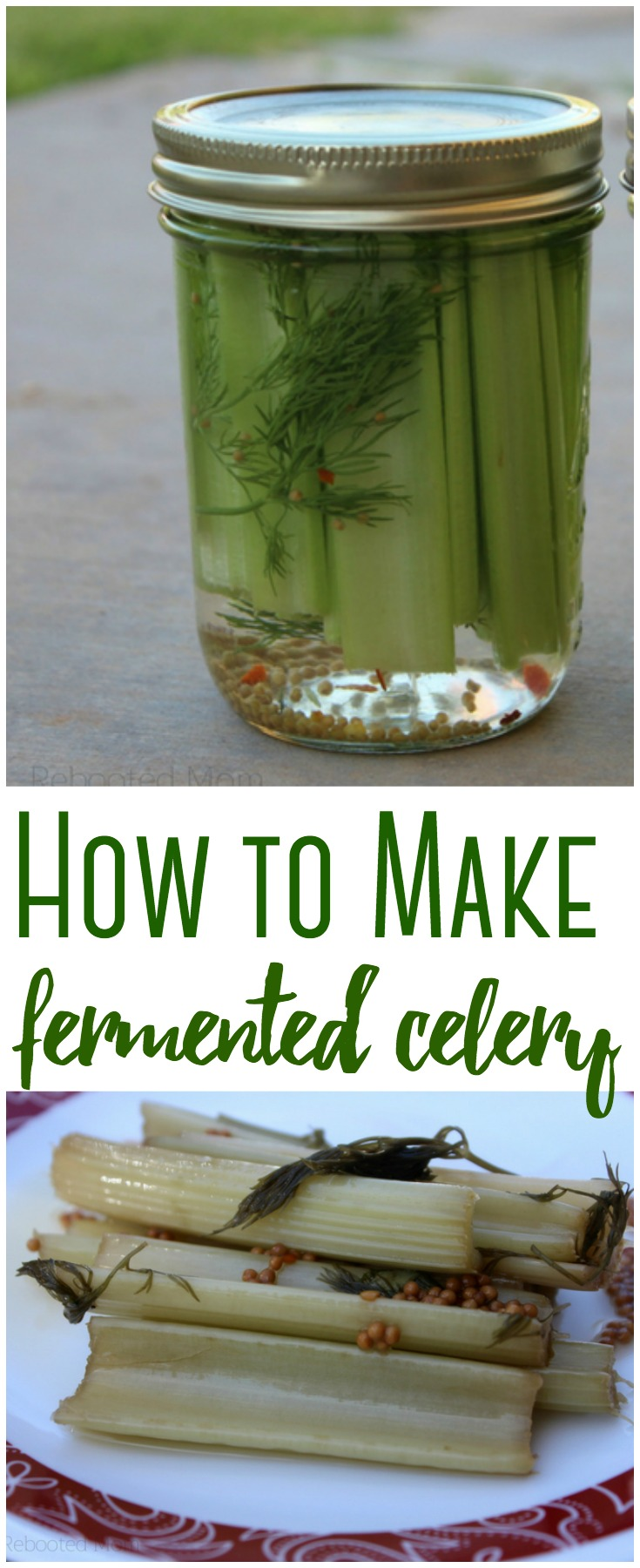 Looking for ways to get healthy, probiotic foods into your diet? Fermented celery only takes 5 minutes and ferments in 5-7 days.