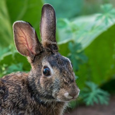 Keep Rabbits Out Of Your Garden Naturally
