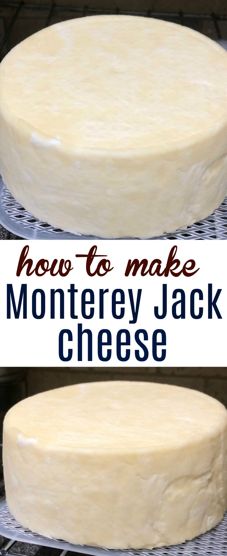 Learn how to make Monterey Jack cheese at home with these easy step-by-step instructions complete with pictures and supply list.