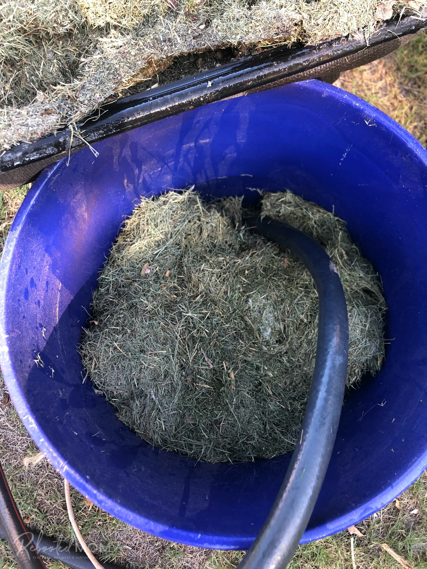 Grass Clipping Fertilizer Tea