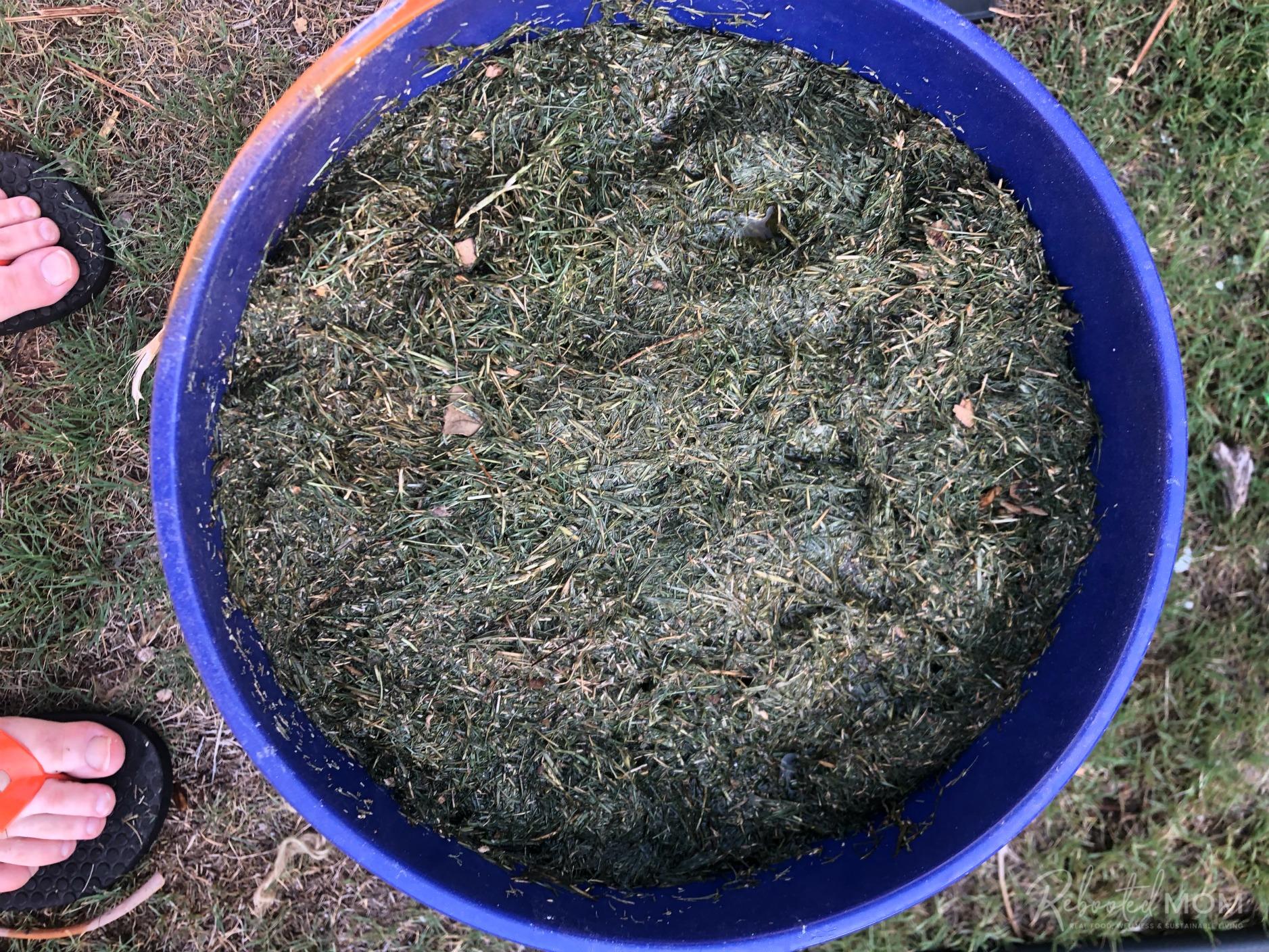 Grass Clipping Fertilizer Tea
