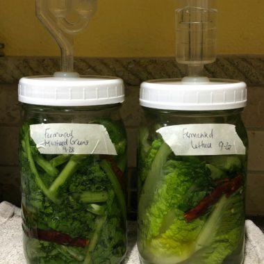 Fermented Mustard Greens