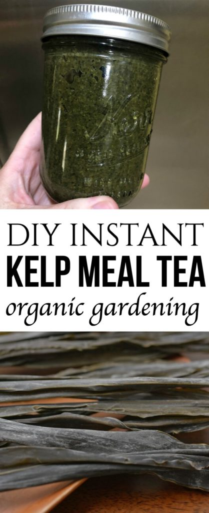 Kelp Meal Tea