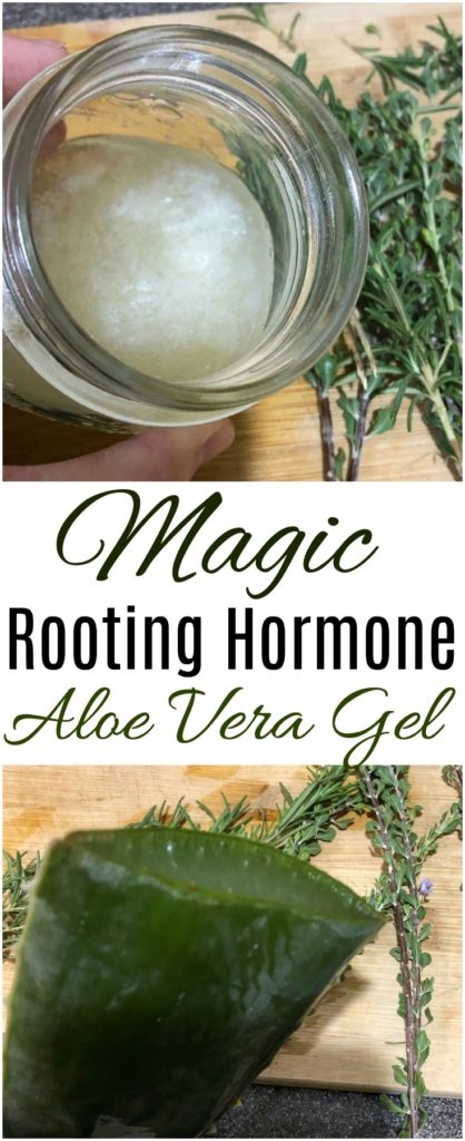 Magic Rooting Hormone - Aloe Vera Gel