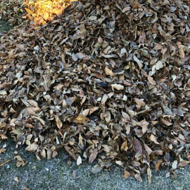 4 Ways to Use Leaves in the Garden